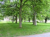 Pohled na stromy v parku DPN Opařany